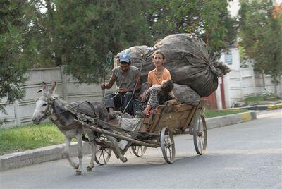 Asino al trotto traina carretto con famiglia disagiata, probabilmente egiziana, e spazzatura.jpg