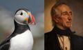 John Tyler differenze con pulcinella di mare.jpg