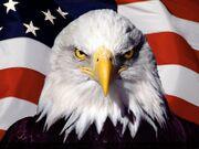 Aquila con bandiera americana.jpg