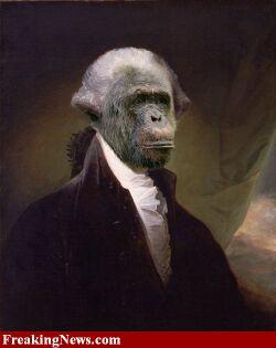 Scimmia sapiens.
